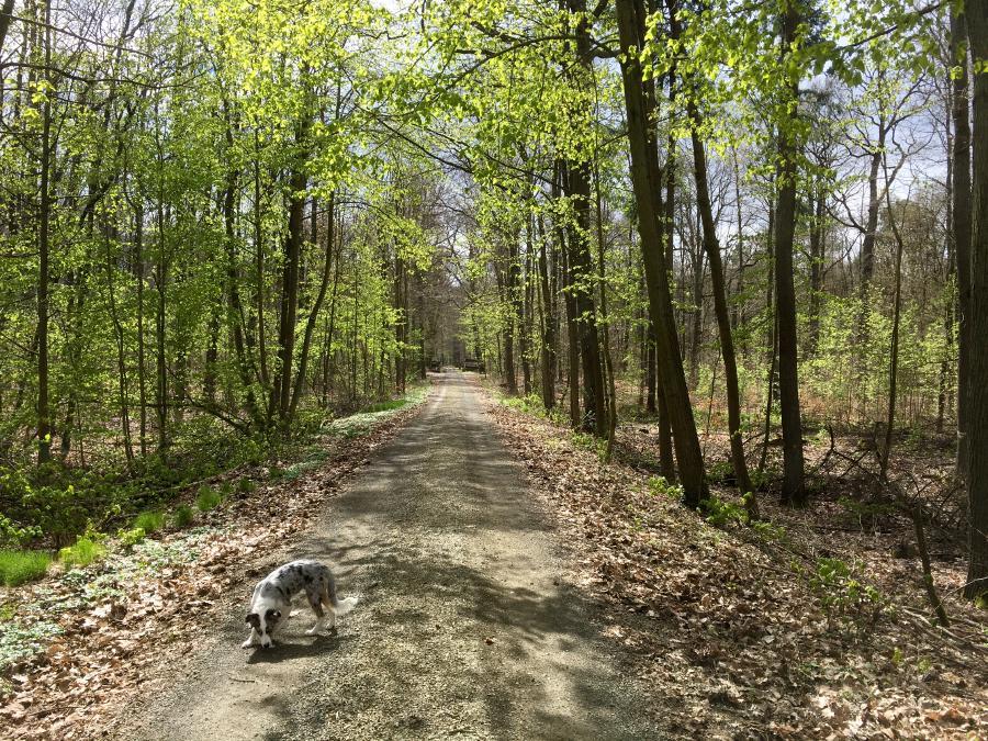 Wanderung-Willibald-Alexis-Weg-beim-Kloster-Lehnin