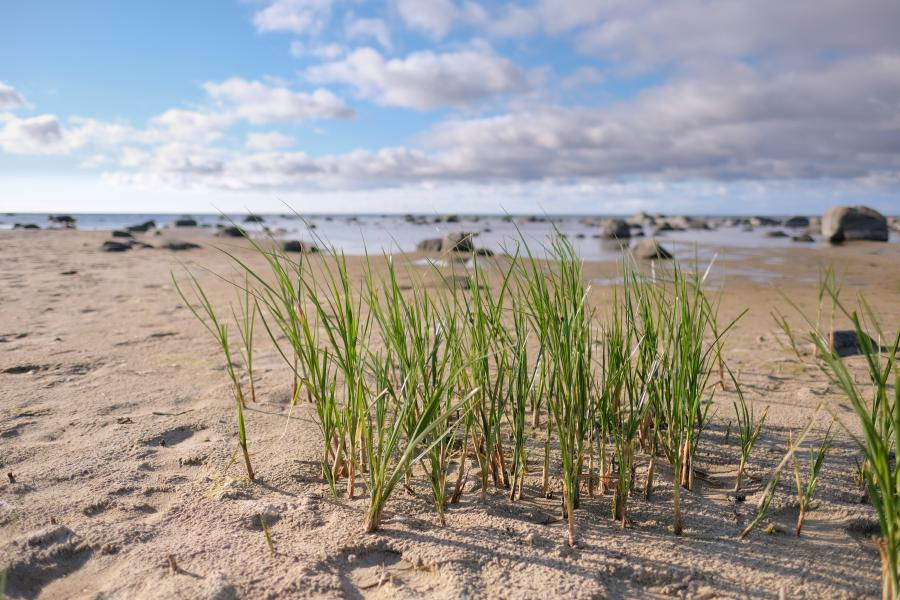 Öland Källahamn Küstenbereich