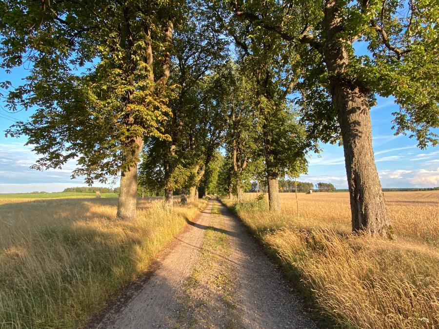 Die Kastanienallee zwischen Annenwalde und Vorwerk Annenwalde