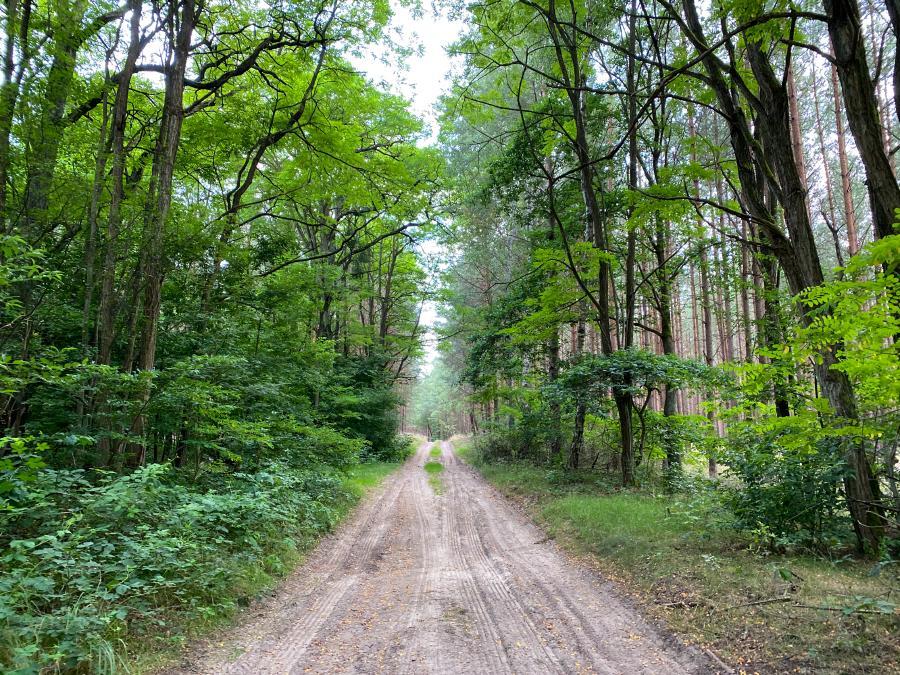 Waldimpression Uckermark