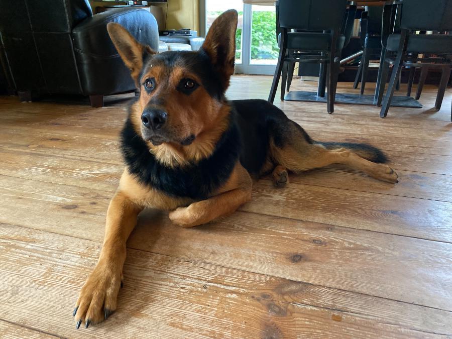 Egon, der liebe Hofhund der lten Gärtnerei