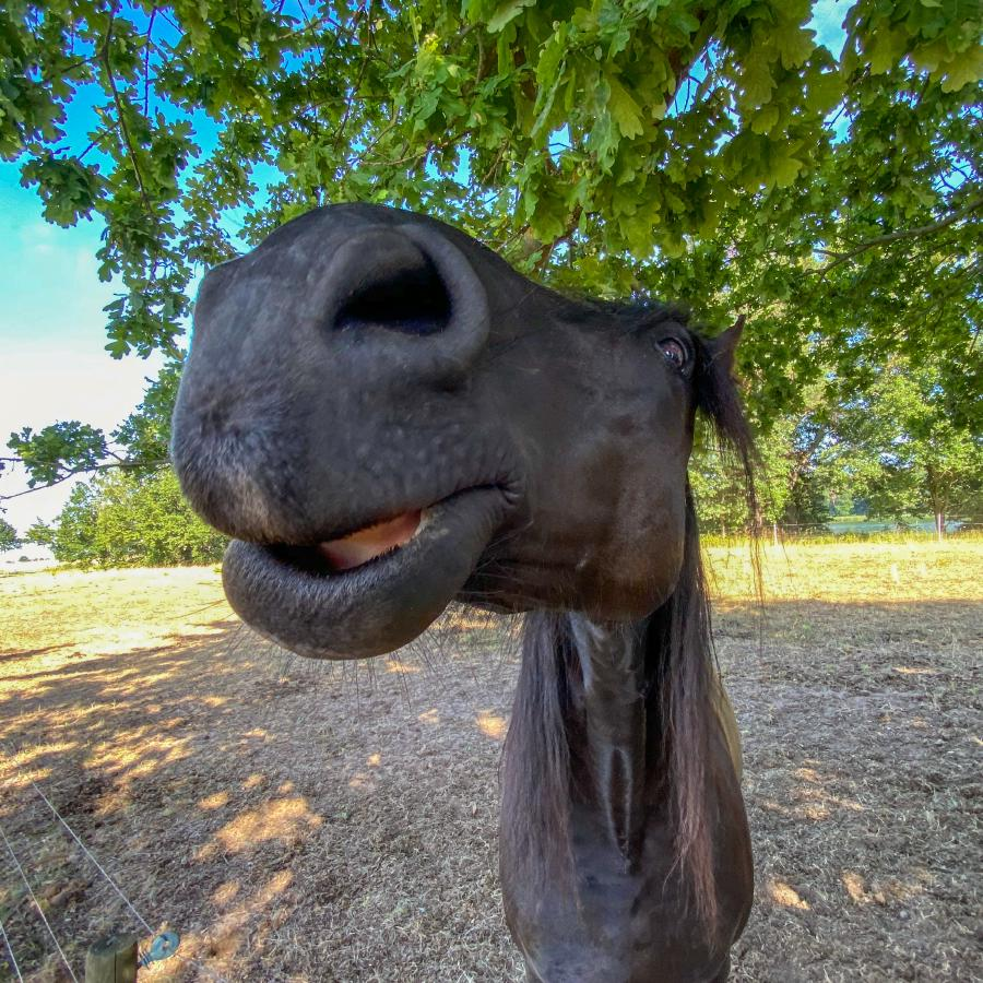 Neugierige Pferdenasen!