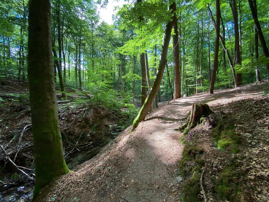 Wanderung am Binenbach, Binenwalde