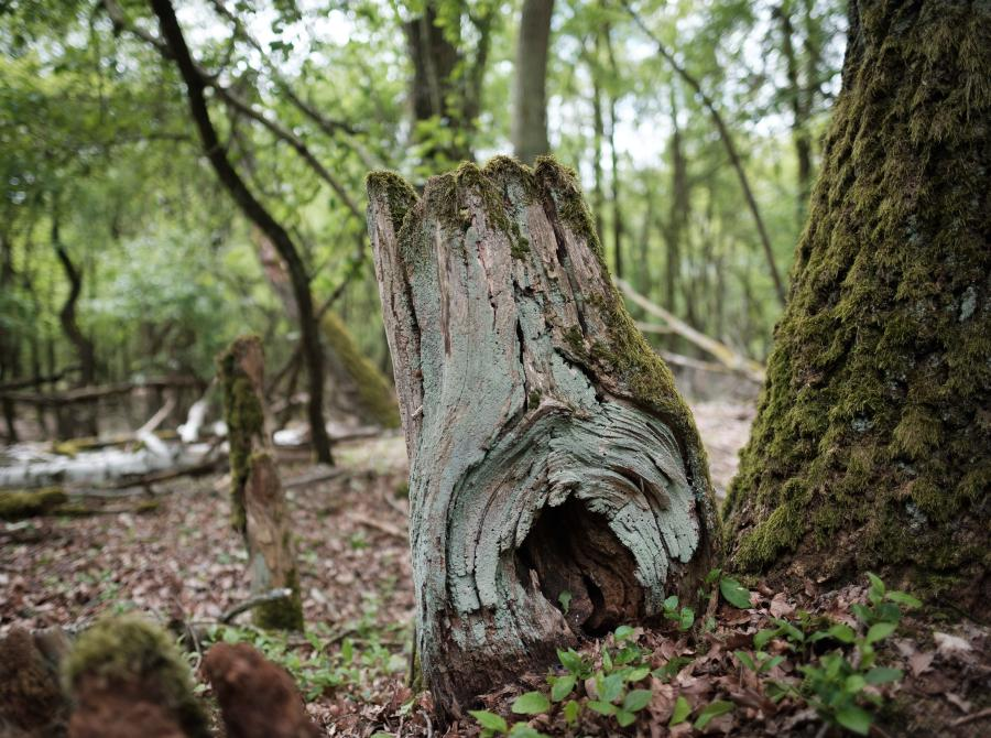 Döberitzer Heide, Baumstumpf