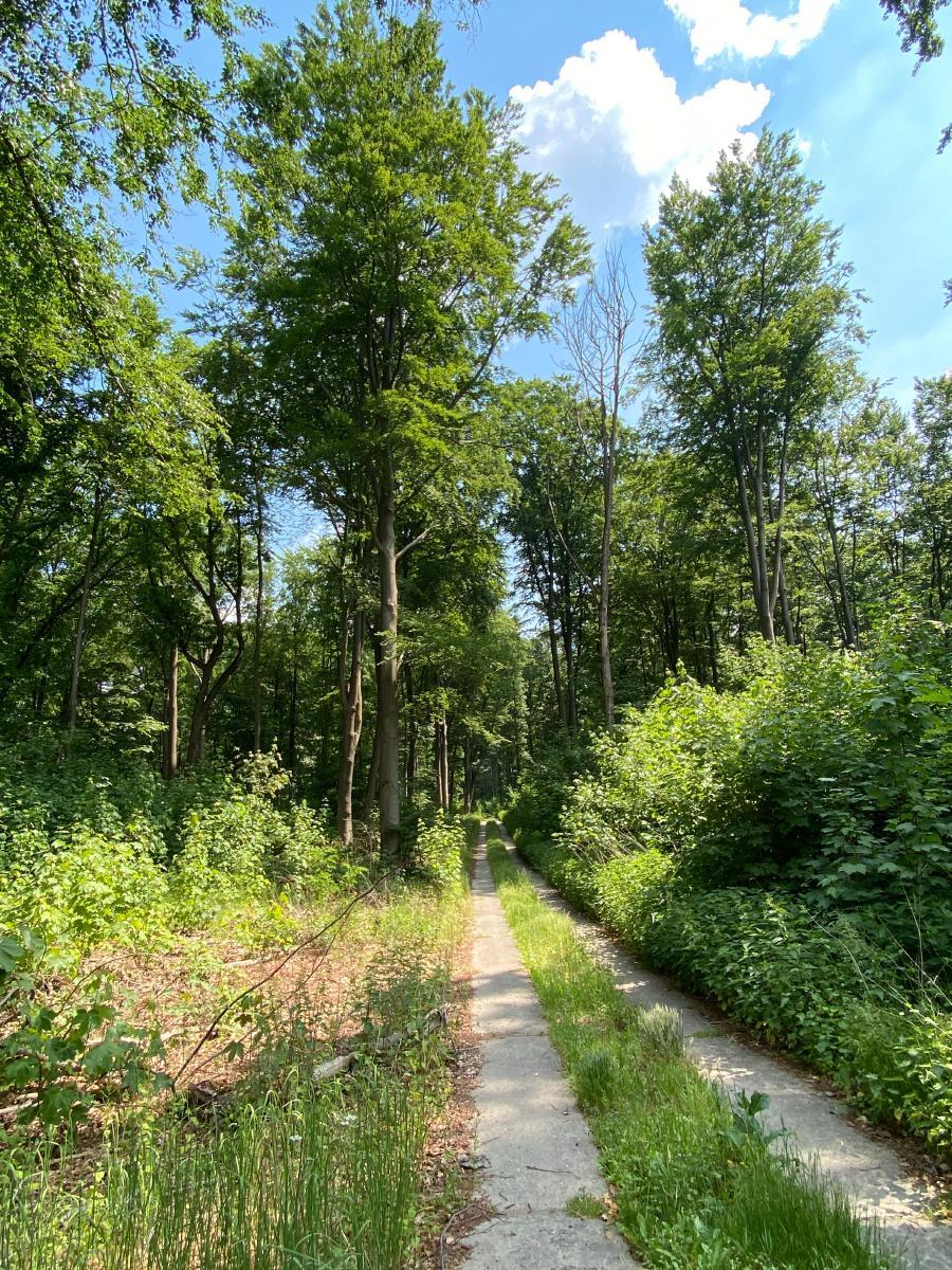 Idylllischer Waldweg am Groß Behnitzer See