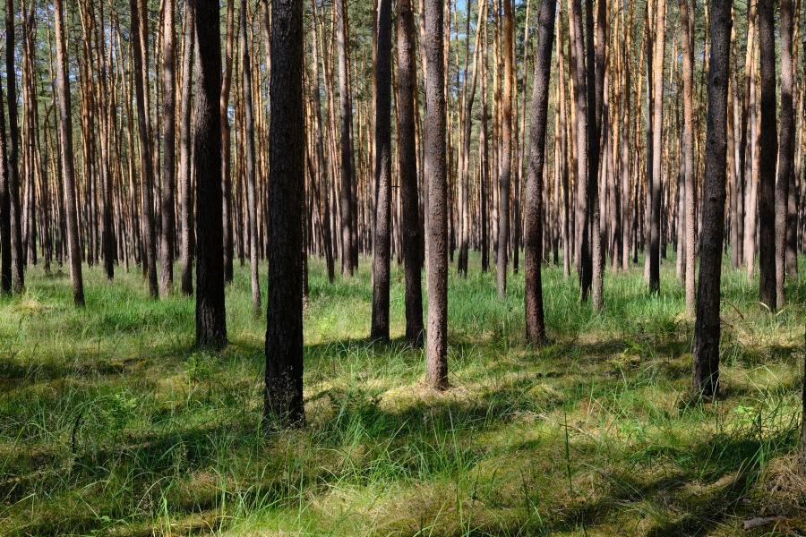 Fläming - schöner Wald