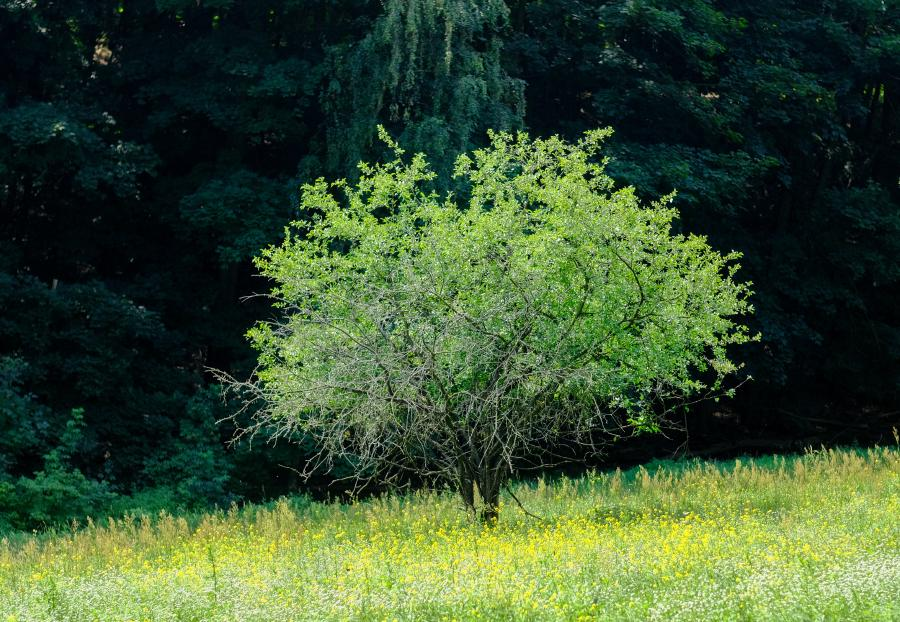 Vorne eine Blumenwiese, dahinter die Wälle der Murellenberge