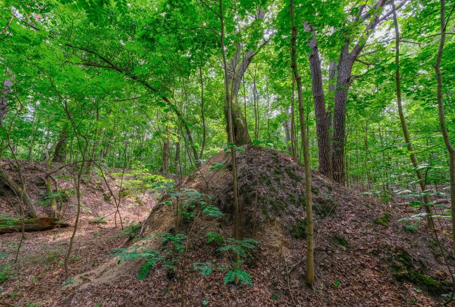 Schützengräben im Schanzenwald