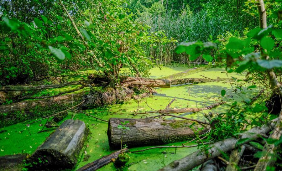 Fließwiese in Ruhleben