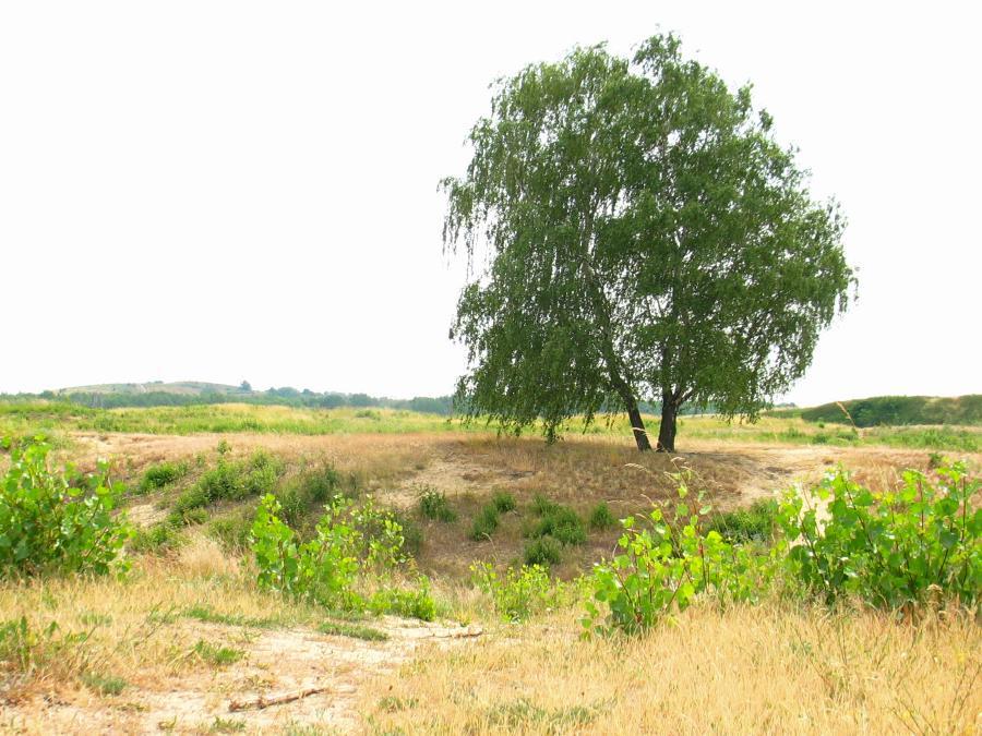 Jpeg Foto 4: Felder hinter dem Hahneberg